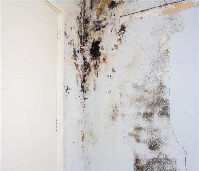 Room with excessive mold on and behind walls.